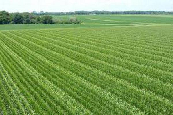پروژه های بخش کشاورزی و آب قروه مورد آنالیز قرار گرفتند