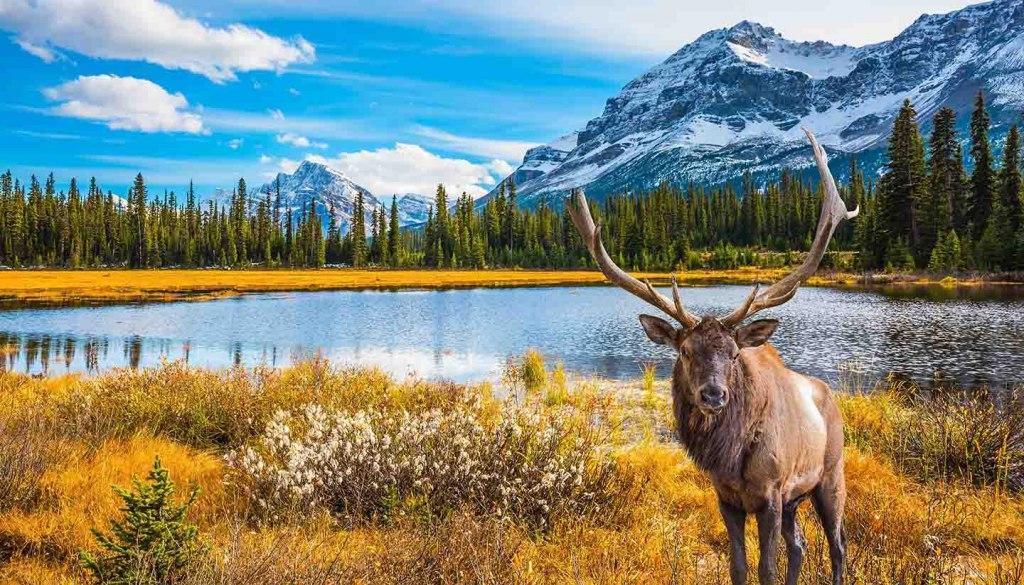آشنایی با نحوه اخذ ویزای مولتی 5 ساله کانادا