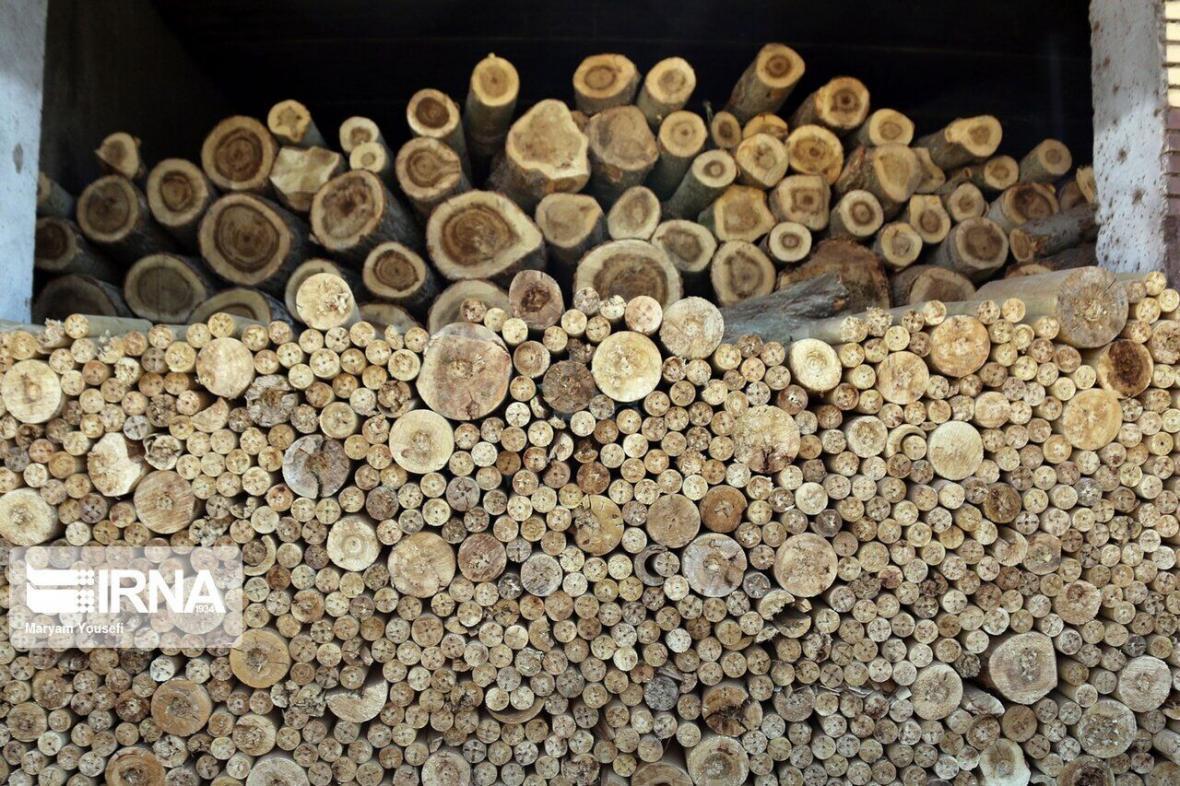 خبرنگاران زراعت چوب در 550 هکتار از اراضی همدان صورت می گیرد