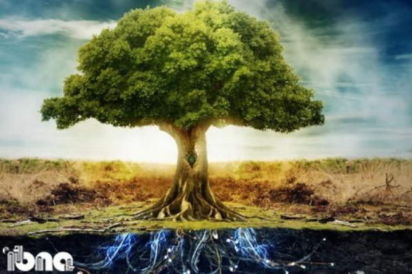 درختان؛ هوشمندانی بی مغز