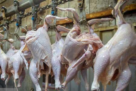 کشف 3500 کیلو بال و کتف مرغ احتکار شده در مرکز