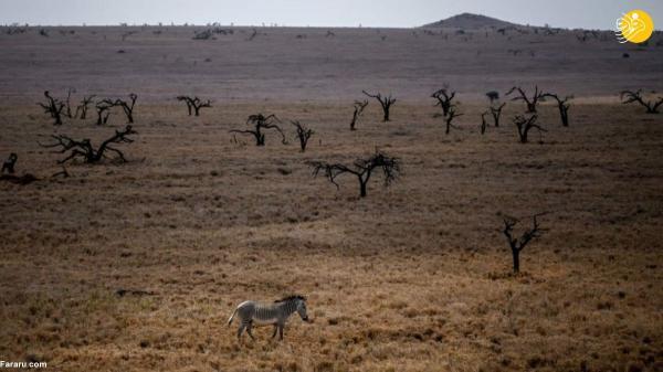سرشماری حیات وحش در کنیا